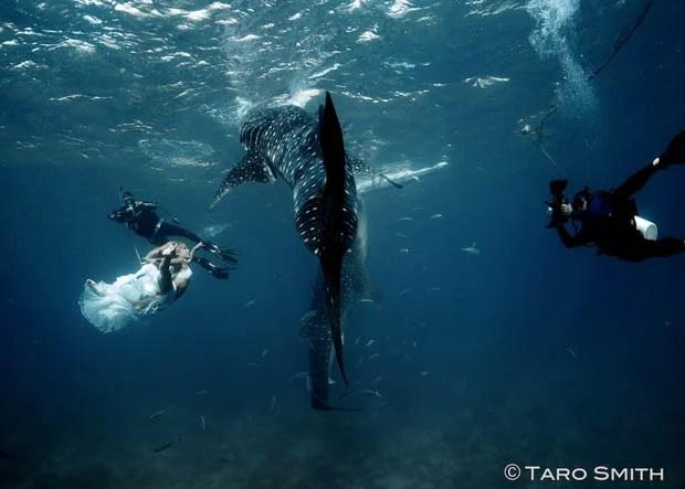 An Underwater Fashion Shoot Featuring a Whale Shark whalesharkfashionshoot 8