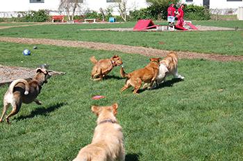red dog pet resort and spa pet
