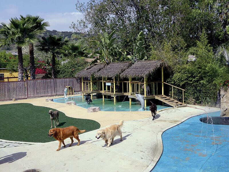 Paradise Ranch Pet Resort wide shot