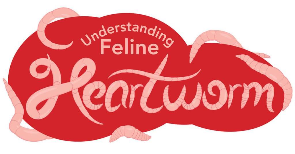 Understanding Feline Heartworm