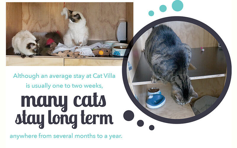 long term cats