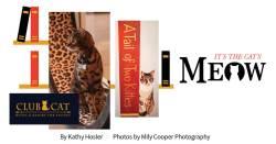 Club Cat Hotel & Resort for Felines