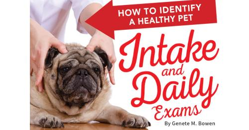 How to Identify a Healthy Pet: Intake and Daily Exams