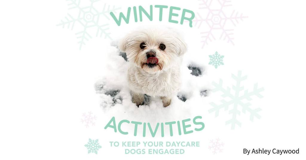 Winter Activities to Keep Your Daycare Dogs Engaged