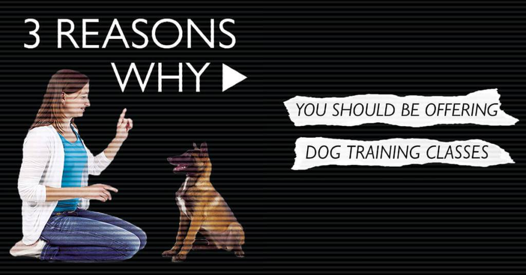 3 Reasons Why You Should Be Offering Dog Training Classes