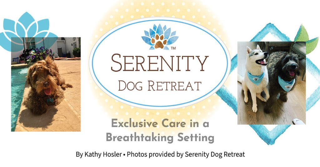 Serenity Dog Retreat: Exclusive Care in a Breathtaking Setting