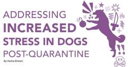 Addressing Increased Stress in Dogs Post-Quarantine