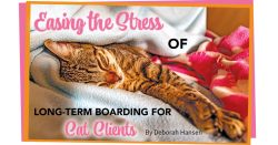 Easing the Stress of Long-Term Boarding for Cat Clients