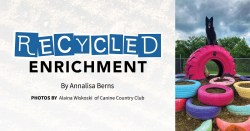 Recycled Enrichment