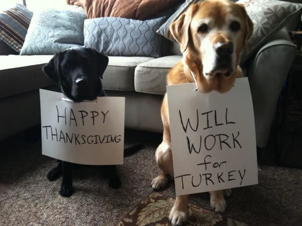 Pet Safety Safe Foods Dogs Can Eat On Thanksgiving Pet