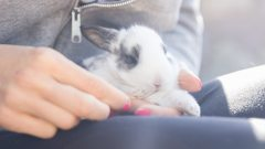 How to Care for a Baby Bunny?
