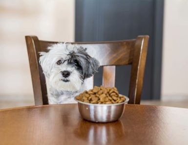 How to Choose the Best Dog Food?