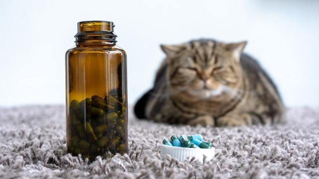 cats diseases cancer