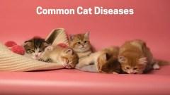 Common Cat Diseases