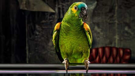 Awesome Things About How Long Do Parrots Live?