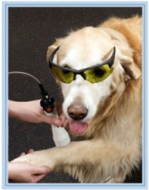 Laser Therapy 3