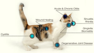 services_laser-cat_1