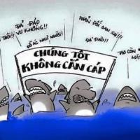 Lịch cắn cáp của cá mập
