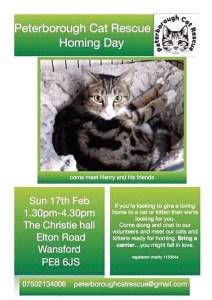 Peterborough Cat Rescue Homing Day