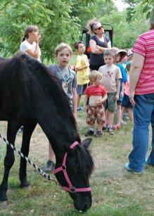 Pony Party 4