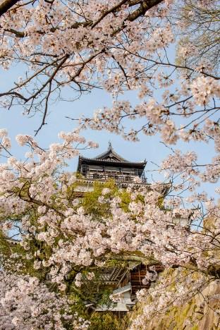 Ohanami, Hiroshima Castle, Hiroshima