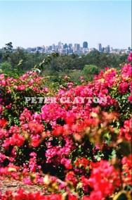 AUSTRALIA - BRISBANE - CITY FROM MT COOTHA R4  (1)