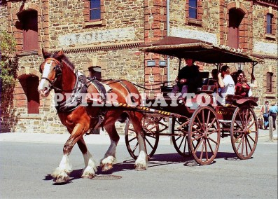 HORSE DAWN BUGGY R4