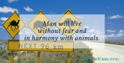 Living in harmony with animals