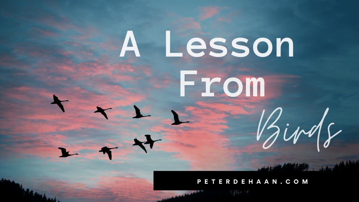 A Lesson From Birds
