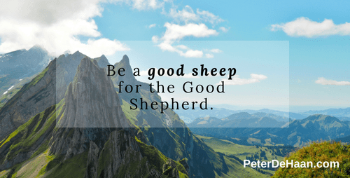 The Good Shepherd and the Bad Shepherd