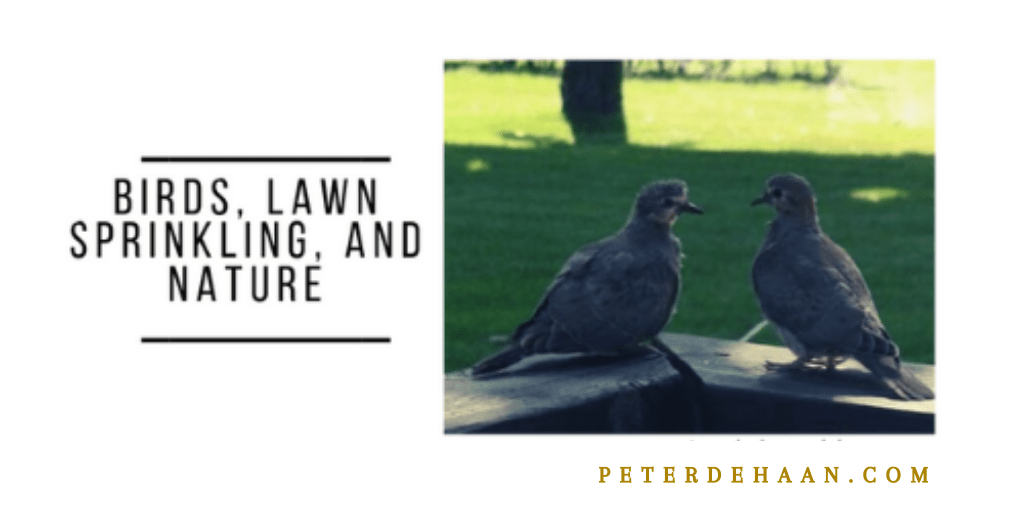 Birds, Lawn Sprinkling, and Nature