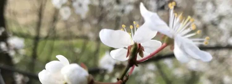 Neuer Notendownload auf petermhaas.de – ein Lied zum Frühling!