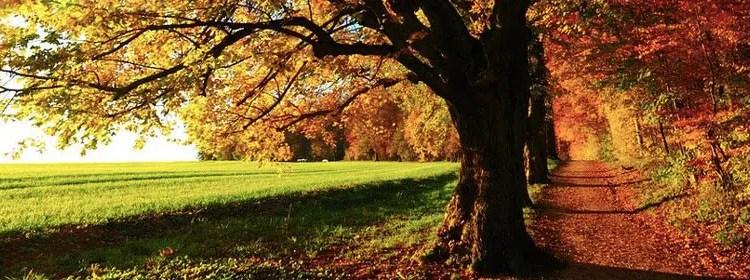 Herbstlied zum download – und andere (gute) Neuigkeiten