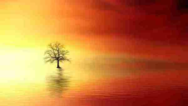 tree in water at the sunset - micro-tension