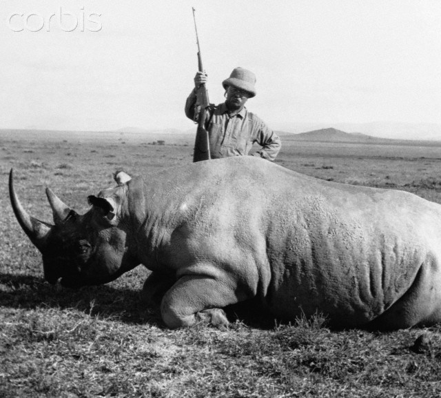 1909 --- Former President Theodore Roosevelt stands over a rhino he has shot while on safari in Africa. Roosevelt went on safari and an extended tour of Africa and Europe immediately after leaving the presidency in 1909. Most of his trophies went to the Smithsonian Institution. --- Image by © CORBIS