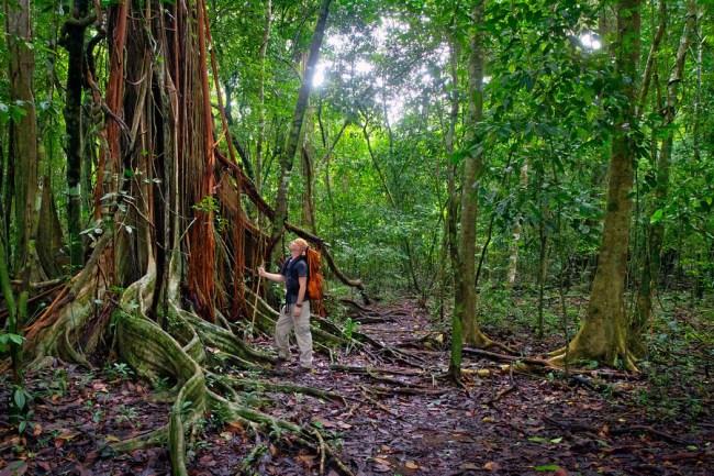 corcovado-rainforest-trail-900x900