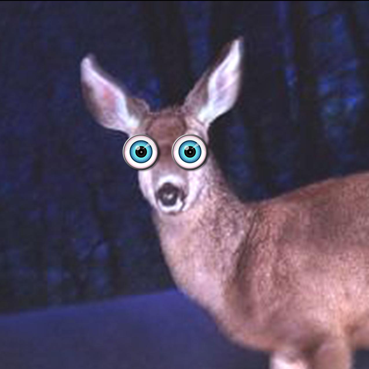 Image result for deer staring into headlights