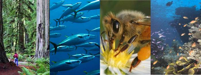 forest fish bee reef