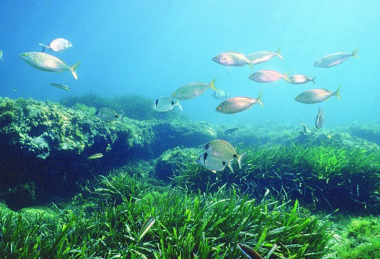 This image has an empty alt attribute; its file name is reef-and-seagrass1-Smithsonian-Instit.jpg