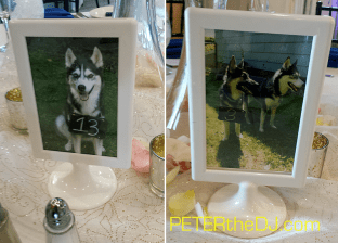 Furry friends who couldn't attend the wedding in person were there in spirit, helping guests find their tables!