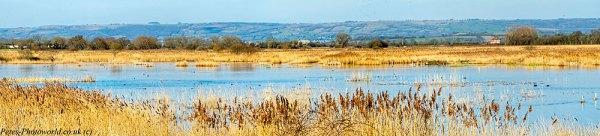Ham Wall wetlands pano