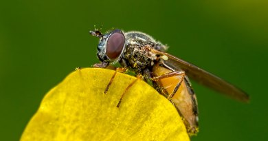 Fly on a yellow petal