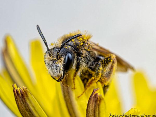 Bee side