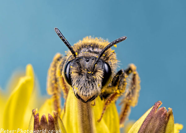 Bee Central
