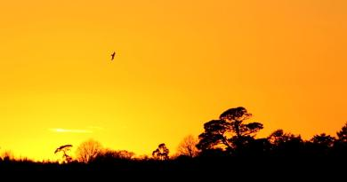 Starling Murmuration Video