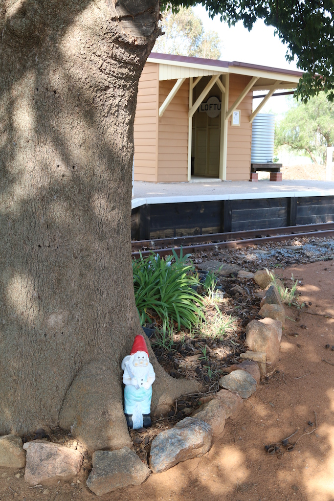 Image 2019.2380: Garrett the Gnome is on security detail under the shade of one on the large Kurrajong trees at the front gate, with the Loftus platform and waiting shed in the background.