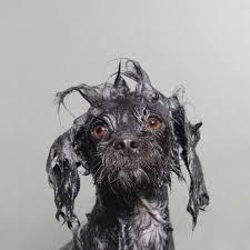 Wet Dog – mais que uma foto