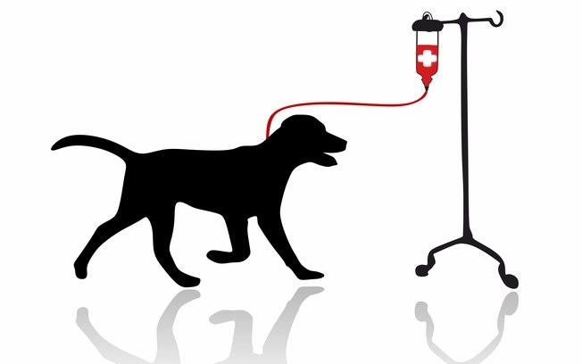 Você sabia que cães e gatos podem doar sangue?