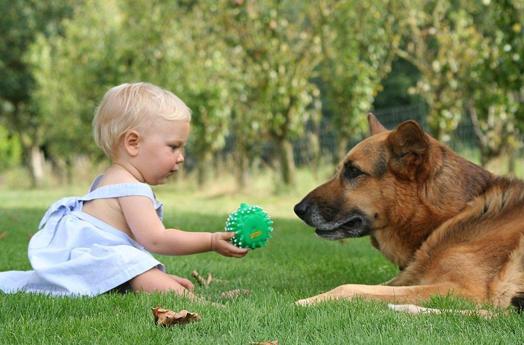Animais de estimação diminuem casos de alergia e obesidade