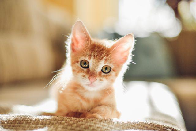 Número de gatos nos lares brasileiro cresce ainda mais